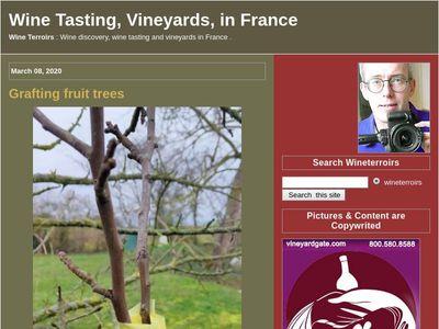 Wine Tasting, Vineyards, in France