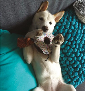 Wamizlove jouet chien