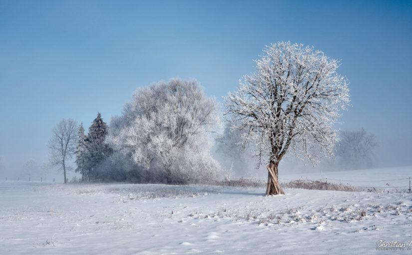 Winterstimmung in Frellstedt