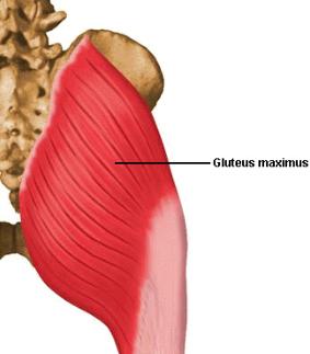 triggerpoint-gluteus-maximus