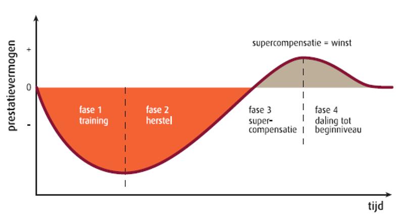 opbouw-training-supercompensatie