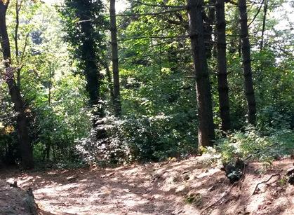 Spina Verde Park