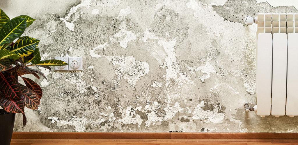 muffa sul muro