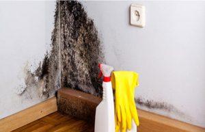 pulire la muffa