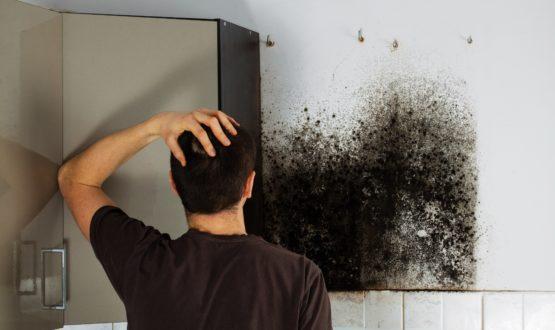 Muffa sulle pareti di casa