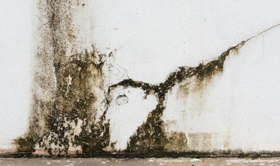 Tipi di muffa sui muri domestici