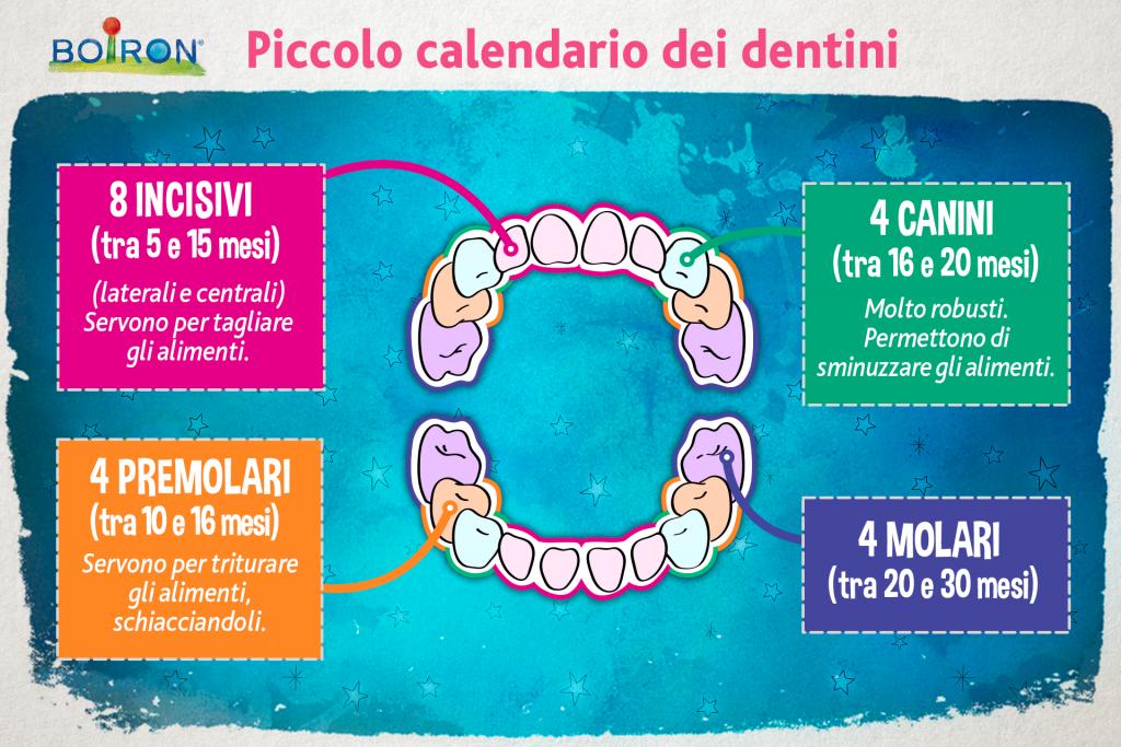 Calendario Dentini.Disturbi Della Dentizione L Omeopatia Puo Apportare Sollievo