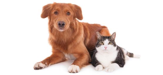 Hund und Katze liegen friedlich nebeneinander