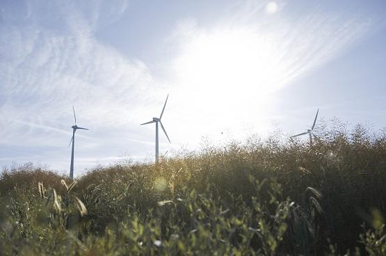 Windmühlen auf einem Feld bei Sonnenschein und blauem Himmel