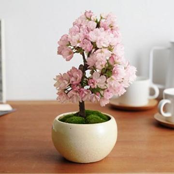 Wongfon Semi di Sakura giapponesi rari Fiore dei bonsai Semi di rosa Cherry Blossom Casa Decorazione del giardino 20 semi - 2