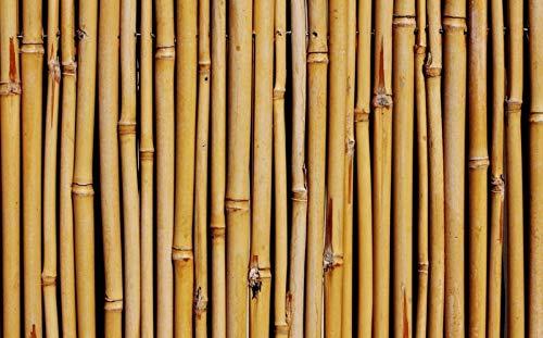 Arella Canniccio in Bamboo con canne spesse 14-16mm copertura da giardino | Canna Passante Frangivista ombra | Stuoia Cannucciata Frangisole | Recinzione ombra in bambù esterno | Dimensioni 200x300 cm - 1