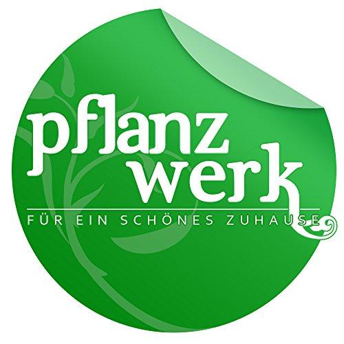 Pflanzwerk Vaso da fiori TUB Ruggine Marrone Plastica BESTSELLER - MIGLIOR PREZZO *Dimensione selezionabile*Resistente al gelo* *Protezione UV* *Europea di qualità* - 1