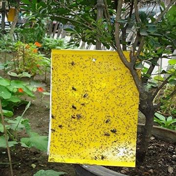 Plai 30 Fogli MoscheTrappola(giallo 20 x 25 cm), Trappola Bi-adesiva per Insetti, Mosca Bianca , Mosca della Frutta , Afidi, Minatori Fogliari, Cicaline - 2
