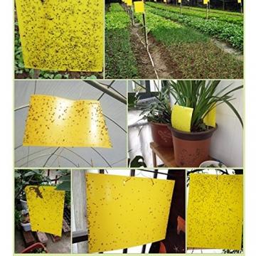 Plai 30 Fogli MoscheTrappola(giallo 20 x 25 cm), Trappola Bi-adesiva per Insetti, Mosca Bianca , Mosca della Frutta , Afidi, Minatori Fogliari, Cicaline - 6