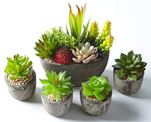 Jobary Set di 5 Piante Artificiali Succulente (Include 10 Piante), Colorate e Decorative Finte Piante con Pietre, Ideali per casa, Ufficio e Decorazione per Esterni - 1