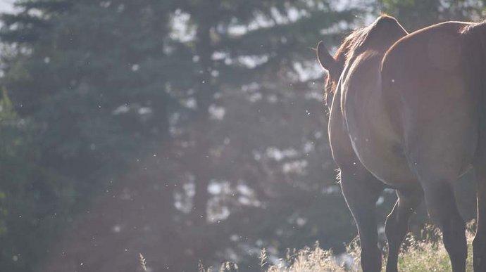 Pferd mit dem Rücken zugewand - traurige Stimmung - der Weg zum Abdecker