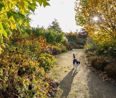 ROSENGARTEN Tierbestattung Garten Badbergen Katze Danny