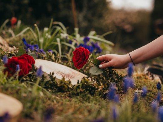 ROSENGARTEN Tierbestattung Urne Urnengrab Garten