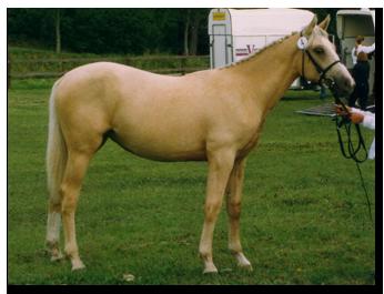 Stellaria (SWB)