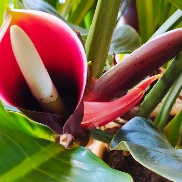 Ateivis iš Amazonės džiunlių