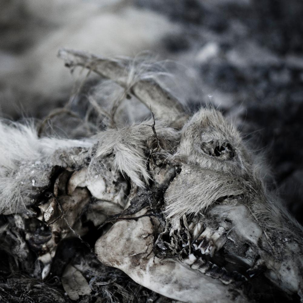 Aphonic Threnody - When Death Comes