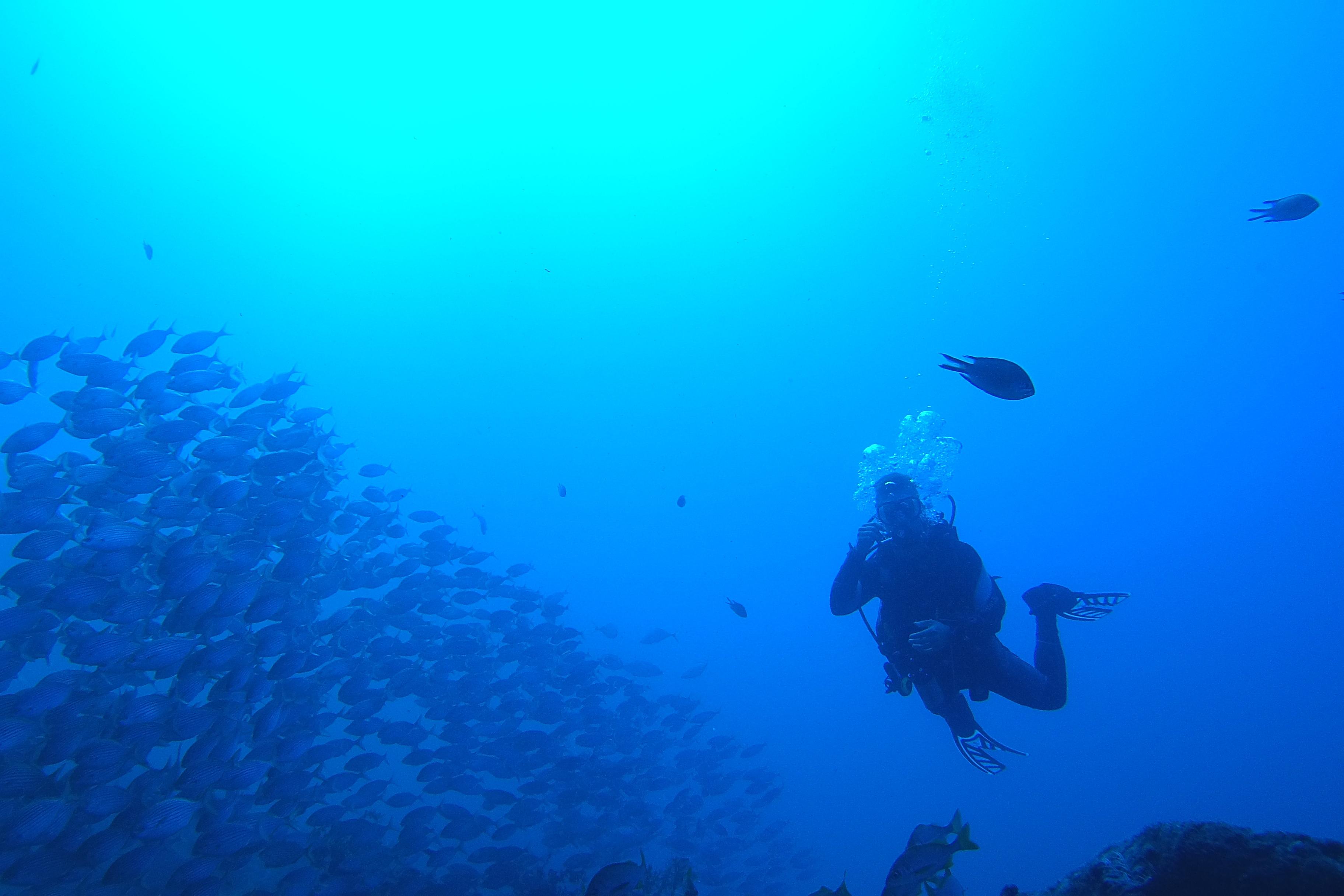 Lukas B. taucht 2015 in Tres Marias vor der Küste Portugals – dabei begegneten ihm Hornschwanz-Stechrochen, Tigermuränen und bis zu zwei Meter große Thunfische. Das seltene Glück, ein Seepferdchen zu sehen, blieb ihm leider verwehrt.