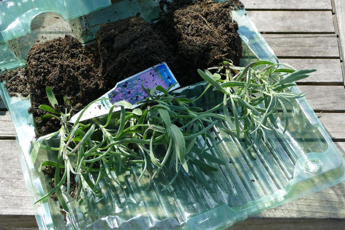 Viel Verpackung, miniklein: Der Lavendel ist mickriger als im Supermarkt.