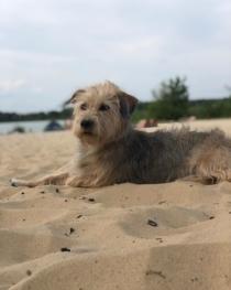 Zaster Hund kosten Durchschnitt Haustier Teuer Martha tierarzt steuer