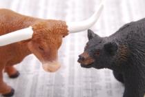 Bear Mammal Market Business Fauna Bull 1362913 Pxhere Com