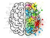 Brain 2062057 1280