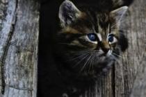 Cat 914110 1280