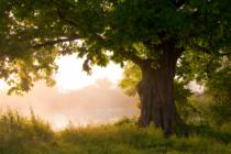Shutterstock 91406234