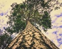 Tree 4498489 1280