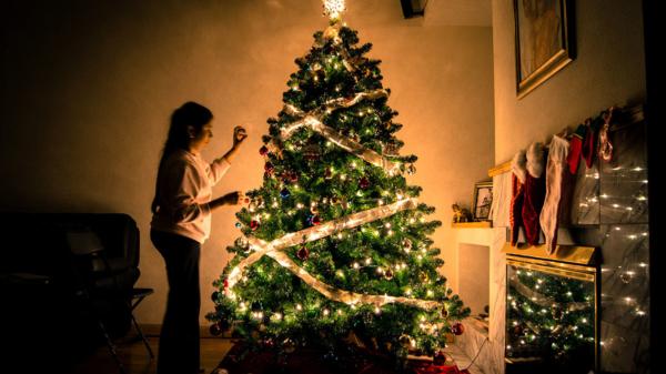 Weihnachtsbaum zaster