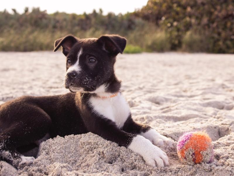 Wie viel kostet der teuerste hund der welt