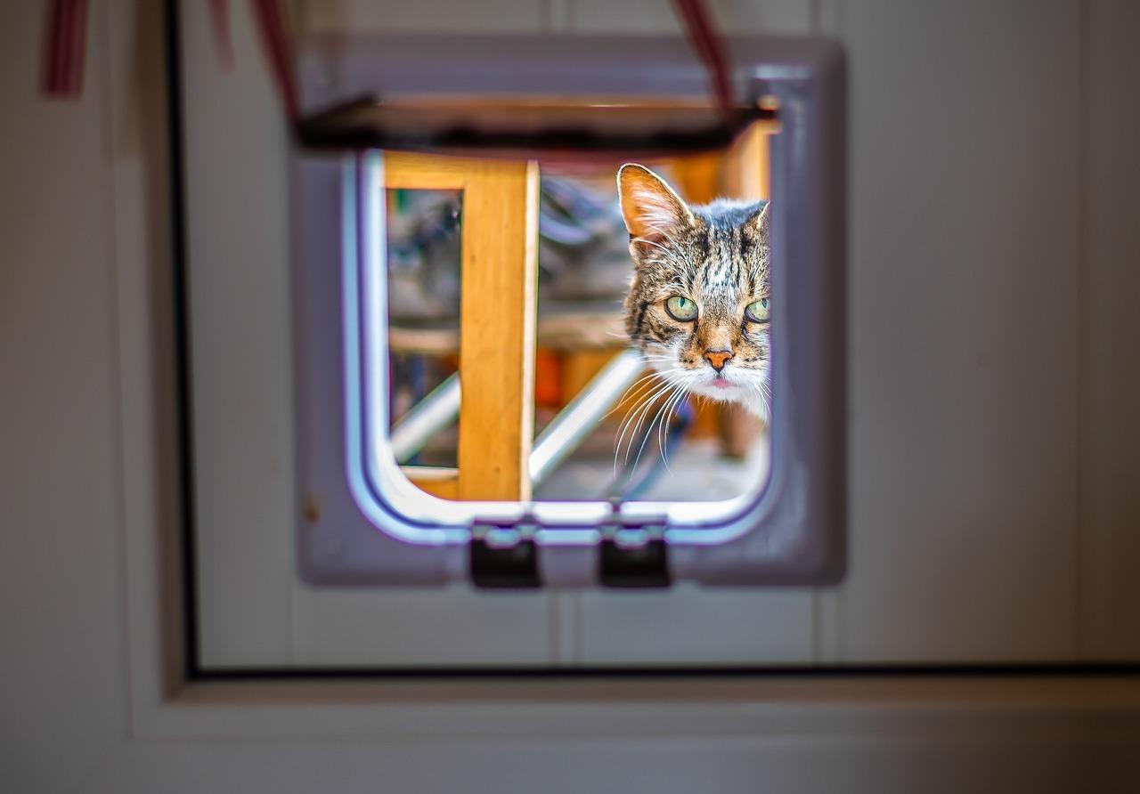 Katzenklappe: Ebenfalls nicht ohne Zustimmung des Vermieters erlaubt ist beispielsweise das Einlassen einer Katzenklappe. Es wurde sogar schon Mietern gekündigt, weil sie sich trotz Abmahnung weigerten, den Einlass für Stubentiger zu entfernen.