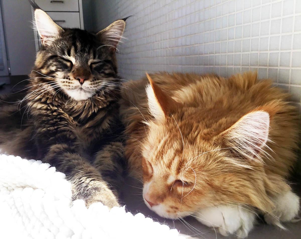 Kasper (links) mit Kumpel Rudi: Zwei Katzenklos müssen reichen.