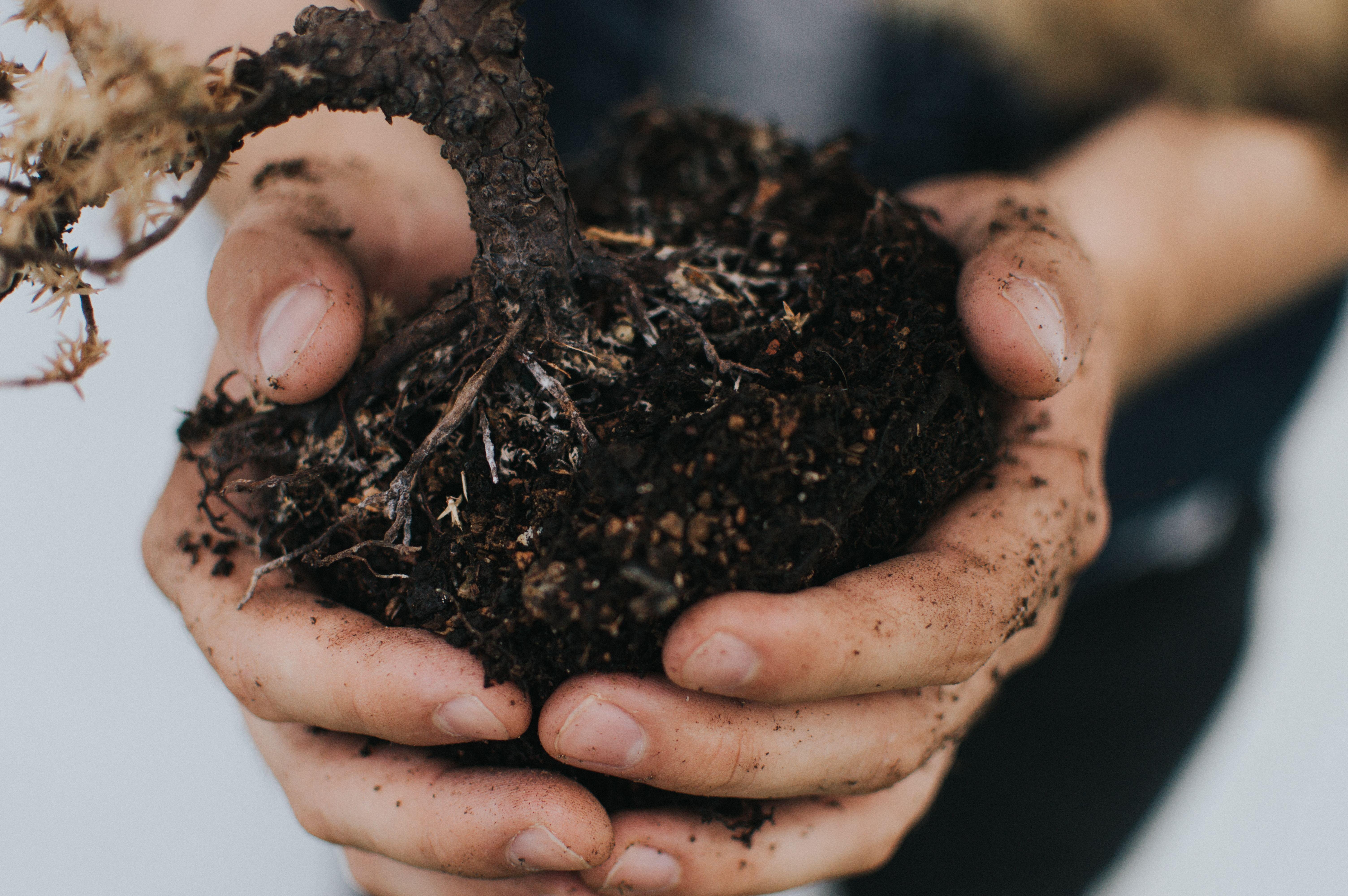 Garten: Der grüne Daumen juckt? Erst fragen! Sträucher, Büsche oder Bäume rausreißen oder neu  pflanzen, ist nur mit Zustimmung des Vermieters erlaubt. Blumen- und Gemüsebeete darfst du hingegen ohne Absprache anlegen.