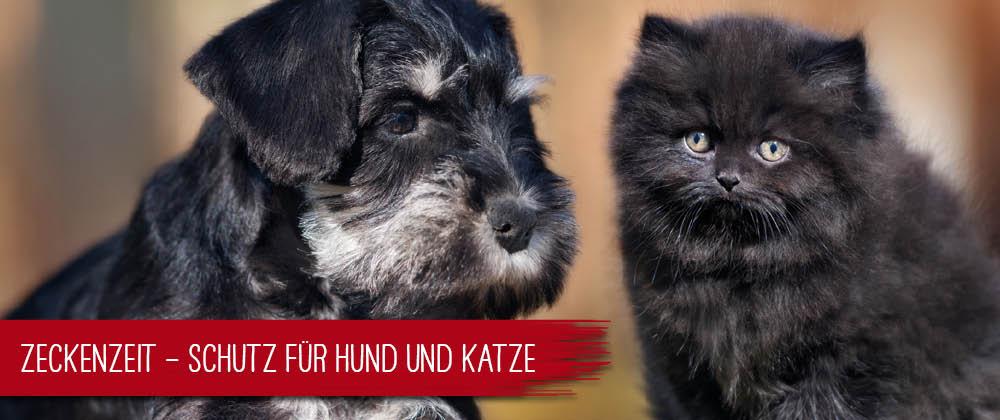 Zeckenzeit für Hunde und Katzen