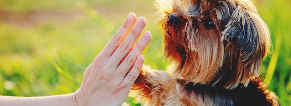 Hundefutter und -zubehör für kleine Hunde
