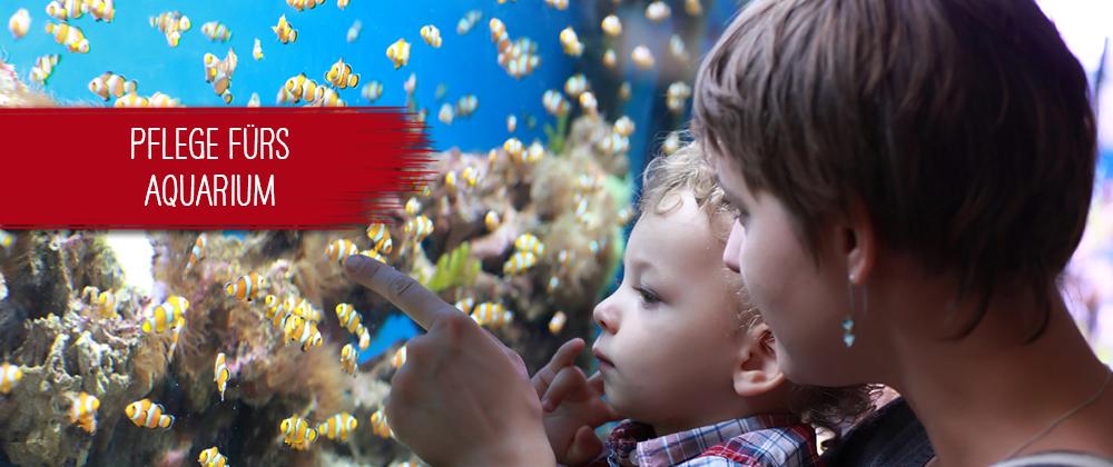 Ein Aquarium richtig pflegen