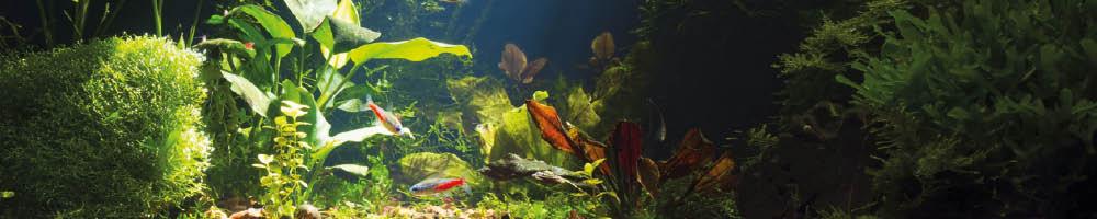 Das Aquarium richtig einrichten Themenwelt
