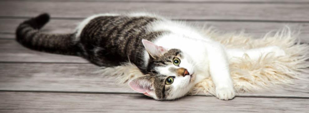 Katzenapotheke - Katzenkrankheiten erkennen und vorbeugen