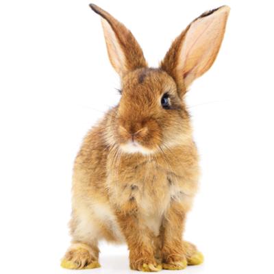 braunes Kaninchen