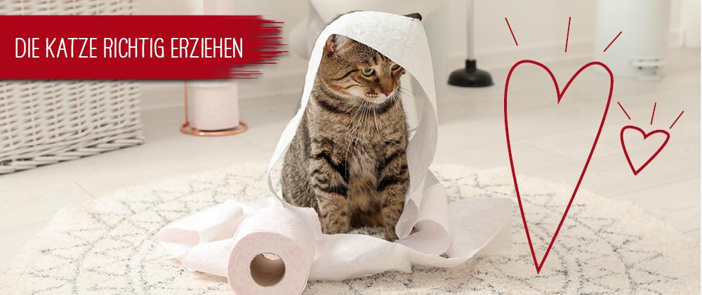 Katze erziehen - Katze mit Toilettenpapier