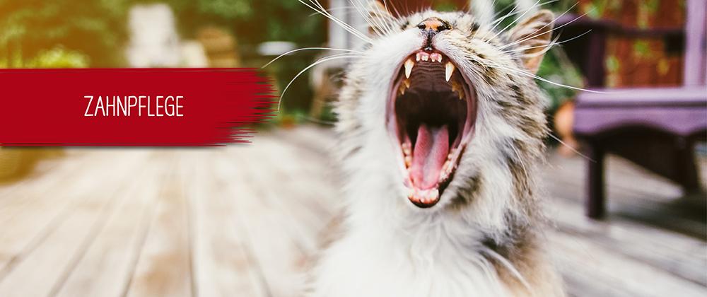 Zahnpflege - Gesunde Zähne Hund und Katze