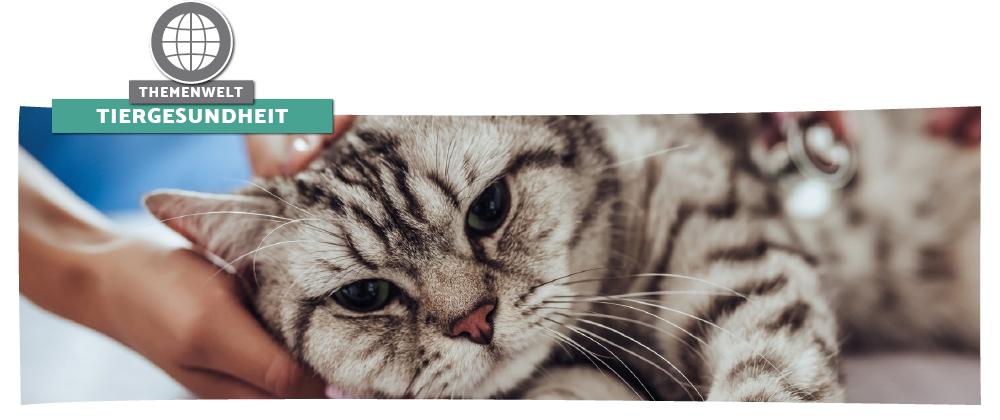 Tiergesundheit - Tipps & Informationen rund um die Katzengesundheit