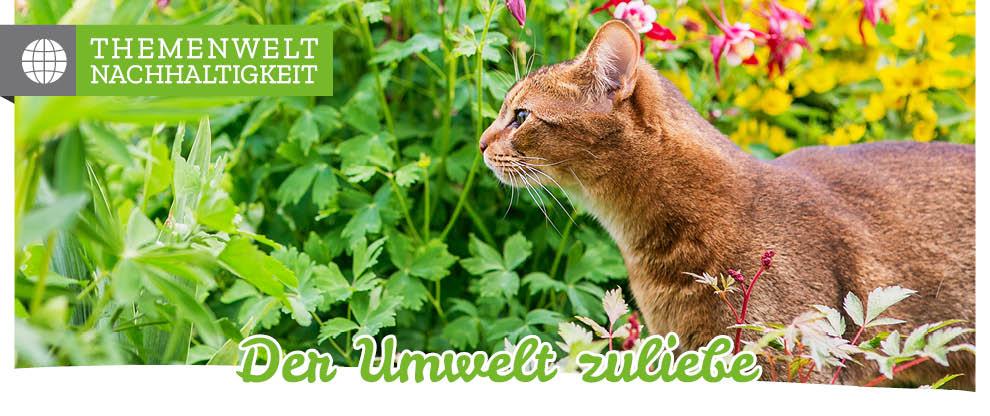 Nachhaltiges Katzenfutter - die Alternative zum konventionellen Futter