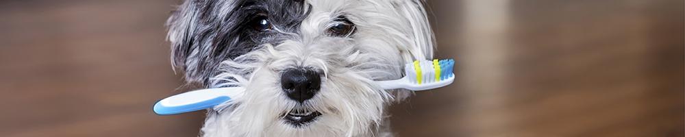 Zahnpflege Hund und Katze