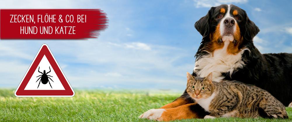Zecken,Flöhe & Co bei Hunden und Katzen